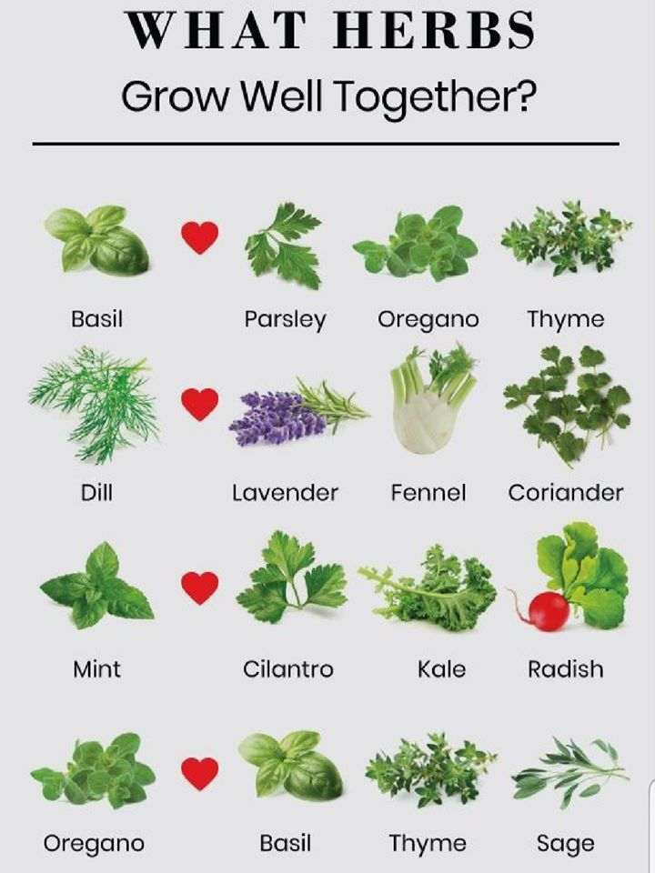 Herbs that work well together