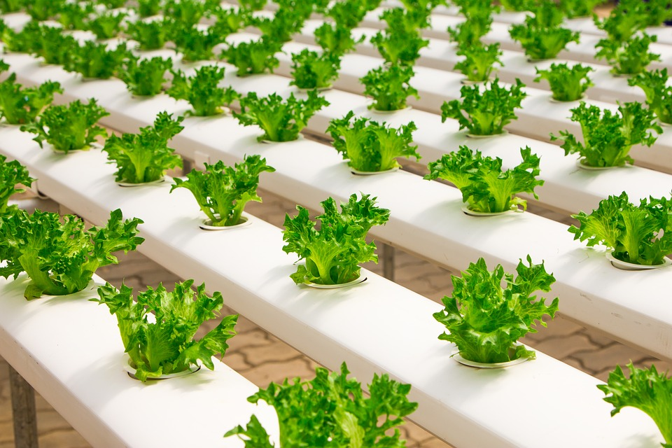 Hydroponics Vegetable Garden Farming