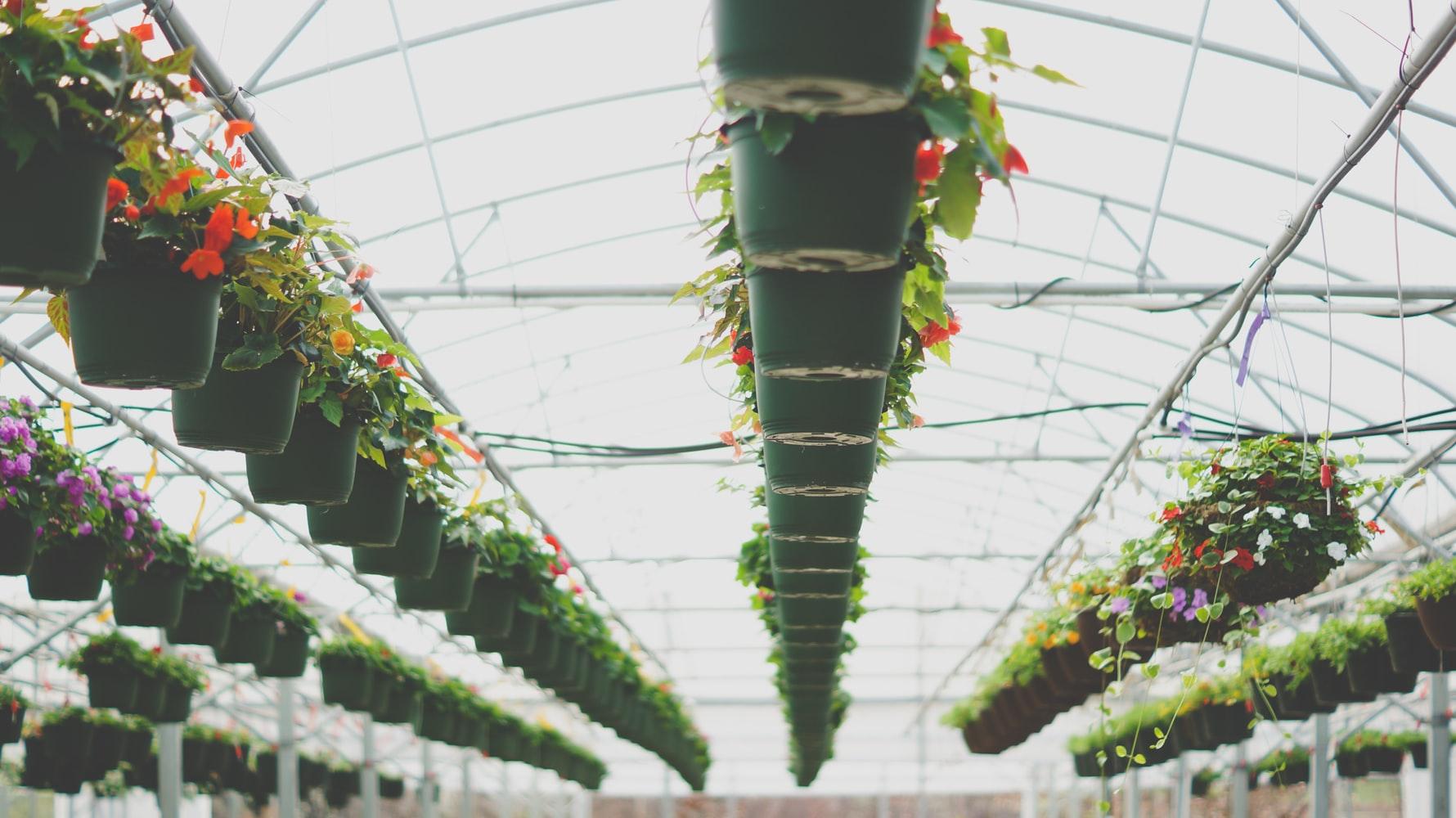 Indoor Green House
